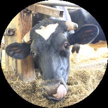 Melkhus Ardestorf - Unsere Kühe